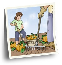 Young woman harvesting pumpkins